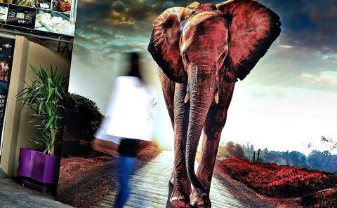 Elefante Logotec Foto Mural