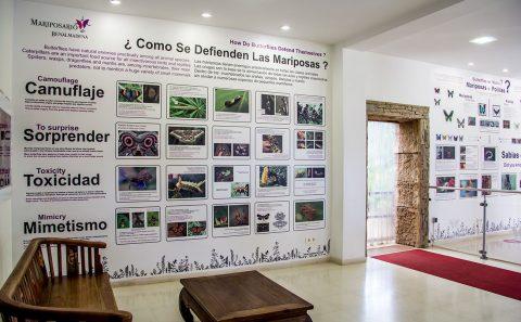 Mariposario Benalmádena Foto Mural